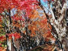 富士河口湖もみじ回廊