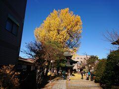 チェックイン時間には少々早いので、遠くから見えた銀杏木のところへ行ってみることにすると… ああ、あれか。 お寺の木だった。 飛騨国分寺。