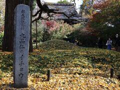 都天然記念物のイチョウ 樹齢700年 皆さんここで記念撮影をします