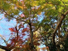 同じく堀田家墓所。ここまで11月16日取材  今年の佐倉市は、こんな感じです。皆さんも身近な紅葉を楽しんではいかがでしょうか。