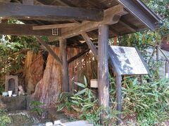 温泉街を散策。黒川温泉のシンボルでもあった樹齢700年の大杉。昭和40年の台風で幹が裂け、倒木の恐れがある為根、根の部分を残し伐採されました。