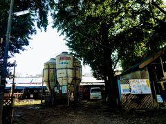 小泉牧場は東京都区内にたった一軒残る酪農家です。 牧場といっても牧草地があるわけではなかったのですが。