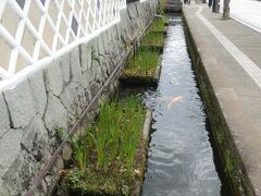 道沿いに堀割があるのも好み。水辺が近い町って魅力を感じるんだよね。 のどかな雰囲気がただよう「山陰の小京都」津和野ですが、三連休の中日だったので有名処はけっこう観光客で賑わってました。