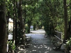 フクギ並木がこんな風に続いています。 この日は晴れていてとても暑くて、日に当たっていると「夏」って感じでしたが この並木道に入った途端、とても涼しい。