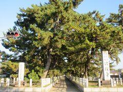 法隆寺参道へ。 ツアーで訪れると通り過ぎてしまいますが、長い参道に植えられた松並木は趣がありました。