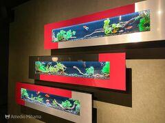 アートアクアリウムとは簡単にいうと金魚の水槽を利用した水族館アートです。 入口の写真を撮るのを忘れました。 https://artaquarium.jp  一度来てみたかったので今回は公開前の前売り券を買っていました。 スマホでQRコーチケットドをかざして入場します