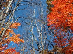 公園入口の紅葉 青空とのコントラストの鮮やかさに思わずパチリ