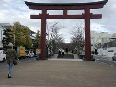 鶴岡八幡宮に続く参道  鎌倉駅から二の鳥居前まで行き、真っすぐ進みます。広い道路の真ん中に参道として歩きやすい道が続きます。両側は道路になっていて店舗が並び、10分くらい歩いたでしょうか?