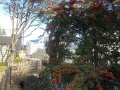 三嶋大社へ行く途中の御殿川。