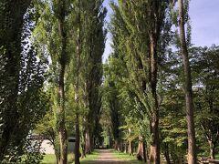 有名なポプラ並木まで進む。 とにかく、キャンパス内の広さに驚いた。