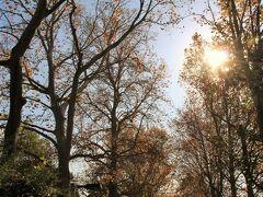 林試の森公園のプラタナス並木はだいぶ落葉していました