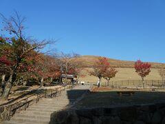 若草山も秋仕様。  先日、てっぺんから夜景見ました。