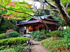 紅葉穴場スポットとなっているのが、茶室『光華』のある庭園周辺。