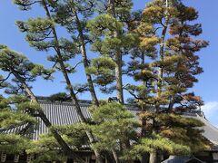 隣りになる大巌寺と大きな松。 ここにトイレがあります。