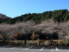 香恋の里駐車場  写真だと奇麗に見えるが 枝が光ってる