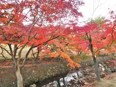 平城宮跡を十二分に満喫した後は、青色のぐるっとバス(100円)に乗っていつもの奈良公園へ。  やはり、ここ最近で最高の人出でした。いや、すごかった。