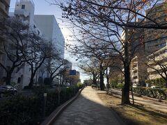 播磨坂の桜並木。桜の季節綺麗でしょうね、今回初めて通ったのでので季節に再訪してみたいところです。
