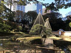 東側、一番東京ドームに近いエリアには内庭と呼ばれる、飛び出た形に位置している一角があり、ここだけで別のお庭のような雰囲気です。  兼六園に来ました、とジョークで嘘がつけそうな雪吊りがされています。