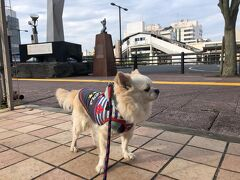 朝一で愛犬と木更津駅周辺をお散歩。