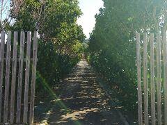 秋葉神社  参道が恐ろしく長いです(笑)  サトウキビ畑の中に参道が500mくらい