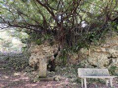 下田原城跡 立派な石垣が残っているも、荒れ果てジャングルのようだった