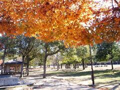 奈良公園内をぶらぶら・・・