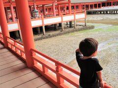 厳島神社。 息子は下でカニさんが歩いてるのを見つけてカニ歩きしてました。