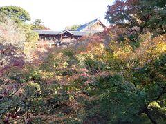 午後から、京都駅の南に的を絞って観光開始。 今頃の京都は、モミジがさぞかし綺麗なことでしょう♪ なんたって、紅葉を見に来たんだもんねっ♪  まずは、超有名な紅葉の名所「東福寺」。  ところがところが、モミジはとっくに盛りを過ぎていて、枯れモミジもいいところ。がっかりしました。     (/_;)