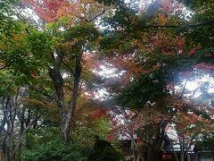 少し紅葉には早かったかな。紅葉シーズン中の庭園はもみじで真っ赤に染まって圧巻なんですよね。