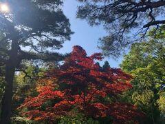 桐谷箱根荘の赤と緑と青。