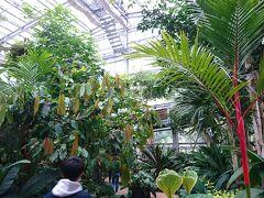 時間潰しのために亜熱帯植物園に入ってみました。 ブーゲンビリアの花など南国植物が多く植えられています。因みに無料です。