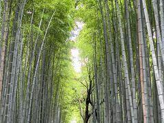 嵐山駅から歩くとすぐに竹林の道になります。  見上げるほどに高く伸びた竹、道の隙間から差し込む光が素敵です。