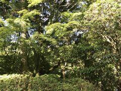 箱根・奥湯河原のほっこり親子旅。  奥湯河原の海石榴で迎えた4日目の朝。 朝日を浴びる山紅葉とツツジが綺麗です。