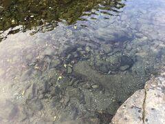 参道から まず傍らの五十鈴川に降ります 小さな魚も泳いでいます 五十鈴川御手洗場