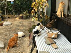 猫ちゃんが集まる民家