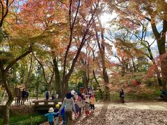 糺の森に来ると  保育園時が遠足に来ていました  こんな場所を歩けて幸せだね !!
