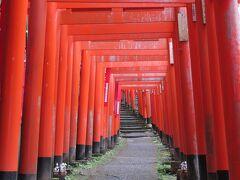 続いて佐助稲荷神社へ。京都の伏見稲荷大社の千本鳥居のミニチュア版といった鳥居のトンネルの参道を通って神域へ。佐助稲荷神社の公式ホームページによると鳥居は49基とのこと。