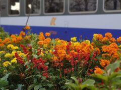 往路と同様、能登中島駅でしばし停車🌼 この日は、観光列車でなくとも、乗務員の方の観光案内ガイド付きでした🚃
