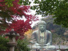 鎌倉大仏殿高徳院へ。紅葉は一部で見頃。まだ葉が緑の木もある。