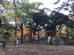 横浜公園でこんないい紅葉のタイミングに出会えたりする