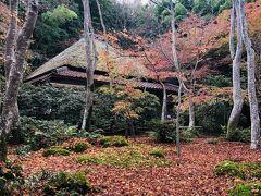 続いて 祇王寺へ  こちらは散り紅葉が有名だから まだまだ十分に 哀感を しみじみと 感じとれます。