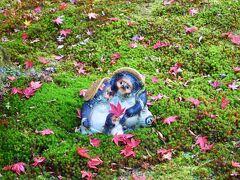 苔庭に散ったもみじとタヌキの可愛い置物が絵になる。