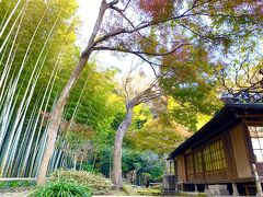 楽しみにしていた竹林です。 この日は晴天なのでとても綺麗です。