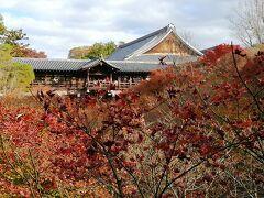 東福寺 通天橋 紅葉が残念・・・・ 紅葉情報によれば見頃になっていますが、今年はこんな色。 拝観料1000円で、人が多かったので渡るのはやめました。