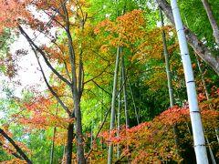 竹林の小径  天龍寺の北門から竹林の小径に出られます。 青々とした竹に秋色が加わって。
