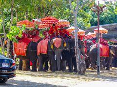 ◆臭い 前回来た際もここに来たが、象が臭くて象に乗るのはパス。 もちろん、今回もパス。
