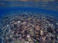 今回は、このようにわりと若い珊瑚がたくさんあるポイントが多かったです。 秋冬は北側は波が高いことが多いので、夏とは違うポイントになってしまいます。