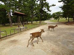 2日目後半です。では、平城宮跡歴史公園に向かいましょう!