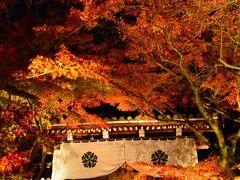 永観堂 http://www.eikando.or.jp/  今宵は古今集にも詠まれたもみじの永観堂のライトアップです☆