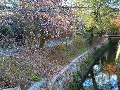 哲学の道  ここはやっぱり桜の時に歩いてみたい~